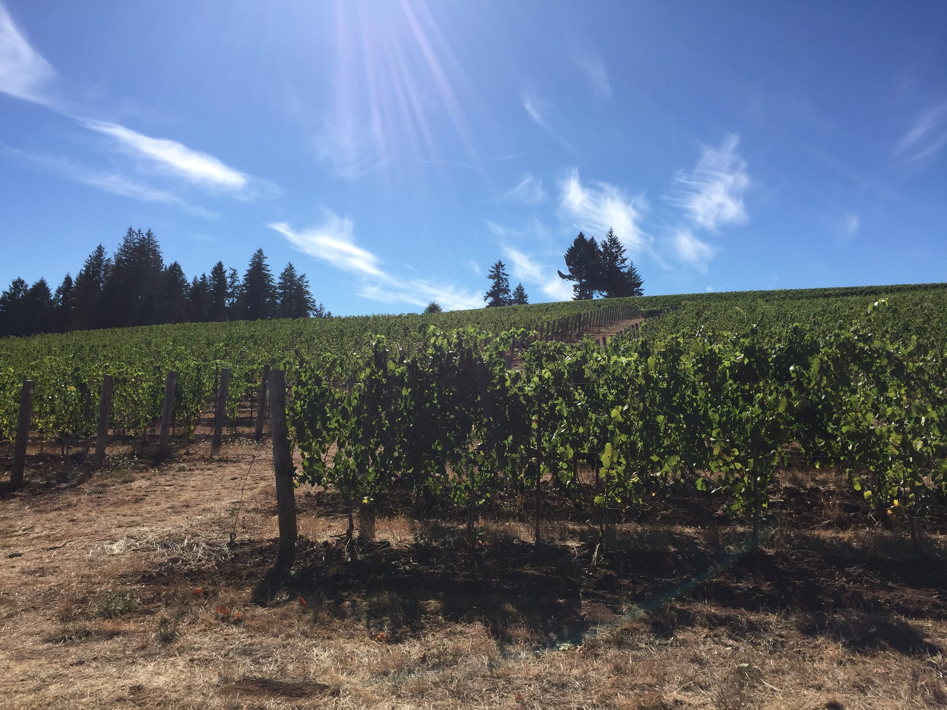 Is Buying Vineyard Land Right for You?