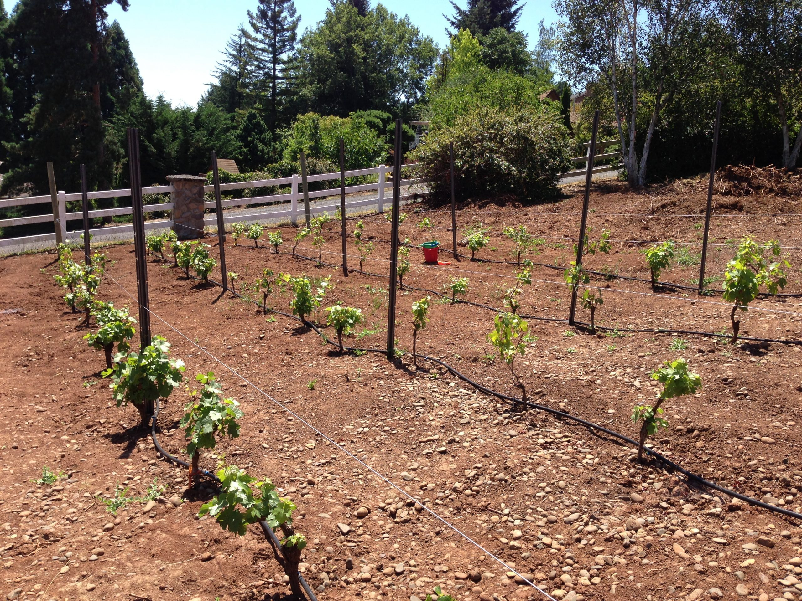 Planning Your Vineyard Site