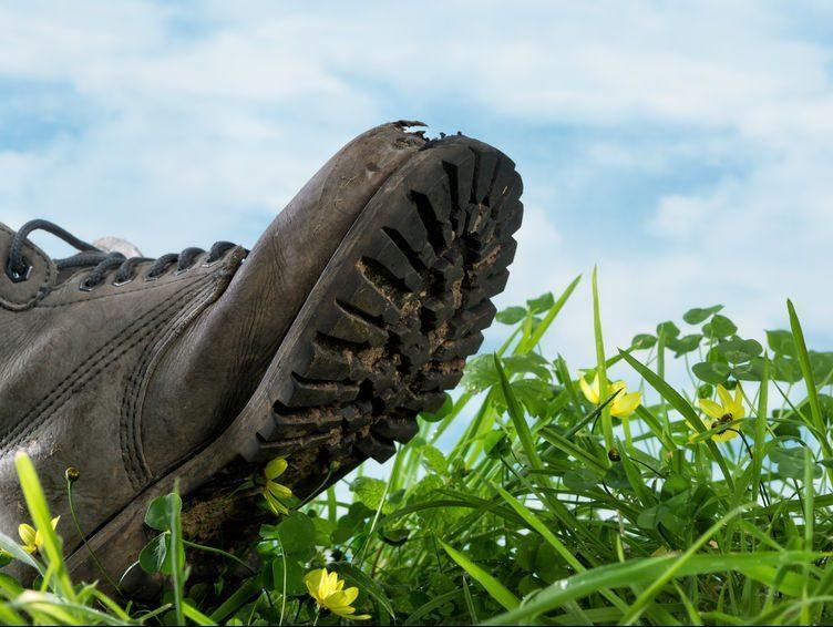 Your Vineyard's Carbon Footprint?
