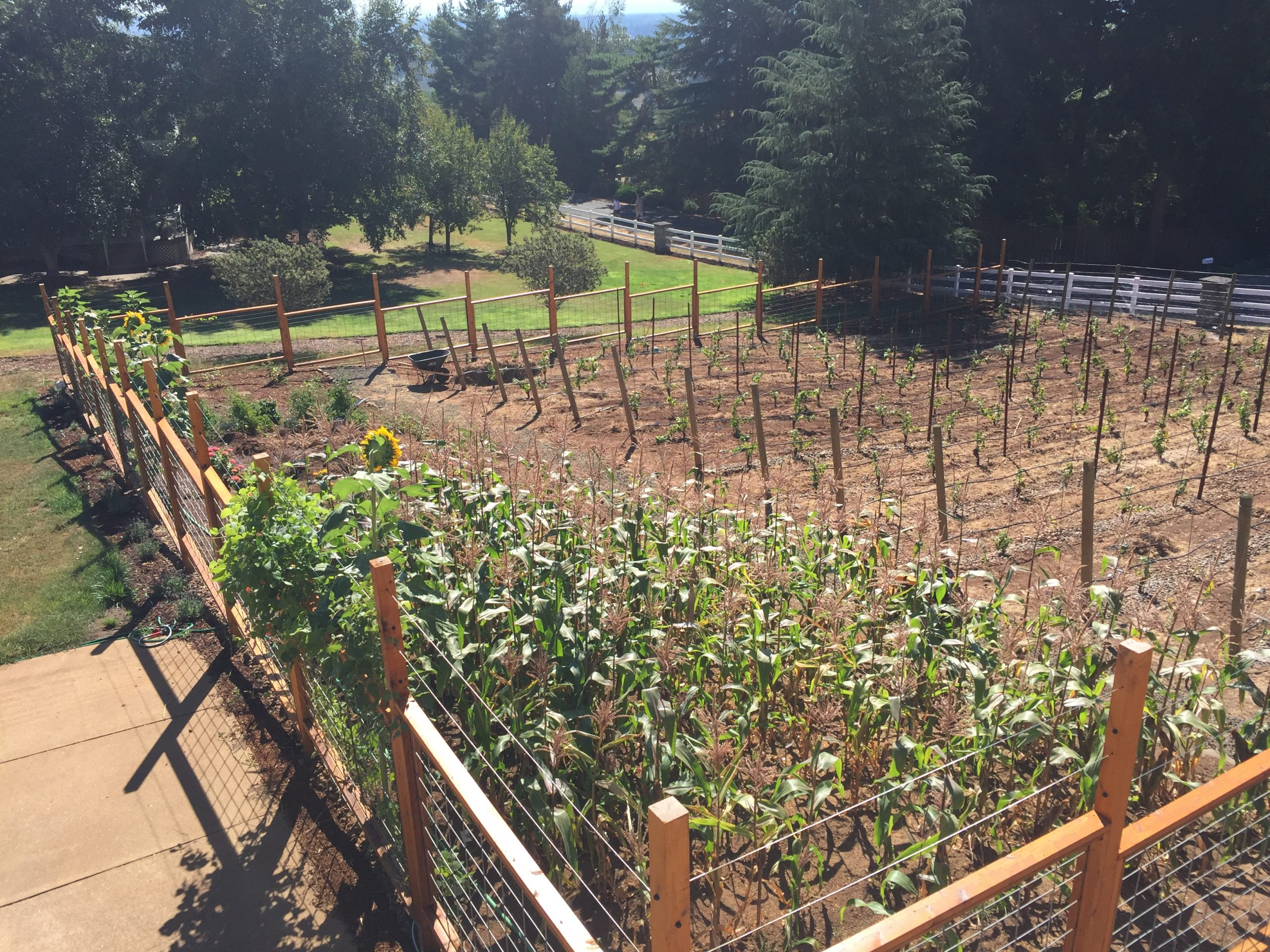 Part 4: So, you want to plant a vineyard?