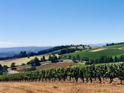 Quality reigns supreme in Oregon's wine industry